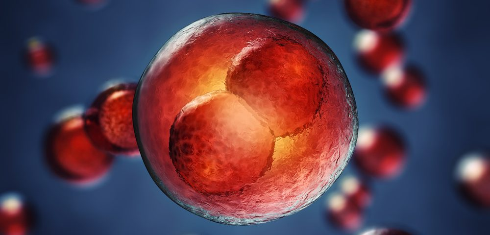 Hemophilia A Patients May See Promising Future Therapy in Embryonic Stem Cell Transplant
