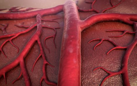 Type of Stem Cell in Blood Vessels Might Treat Bleeding Disorders, Mice Study Shows
