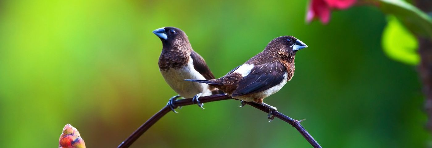 Hemophilia, Epilepsy, and Independence: Time to Fly, Baby Bird