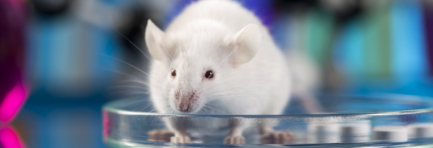 RNA in Nanoparticles Leads to Efficient FVIII Production in Mice, Study Finds